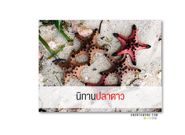 20150226_Starfish