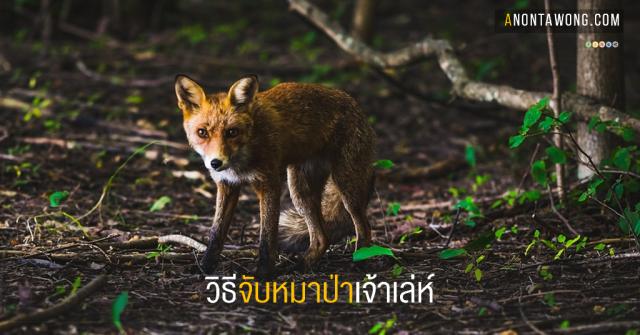 20150925_CatchingtheWilyFox