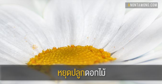 20161128_stopflowers