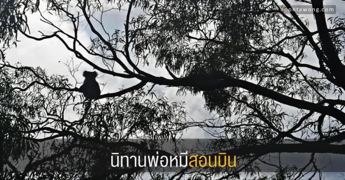 20161229_koala