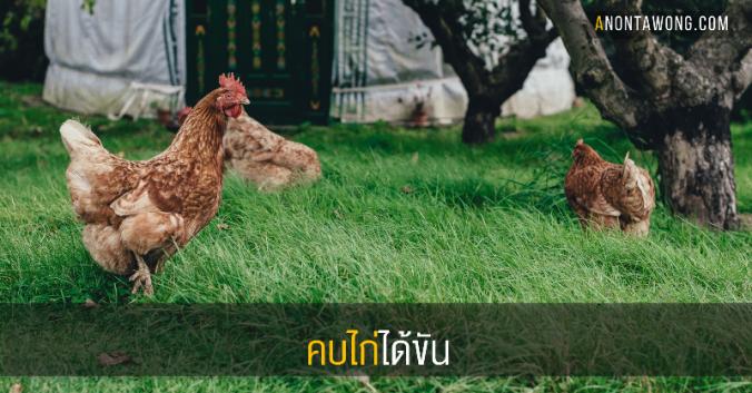 20170323_chickens