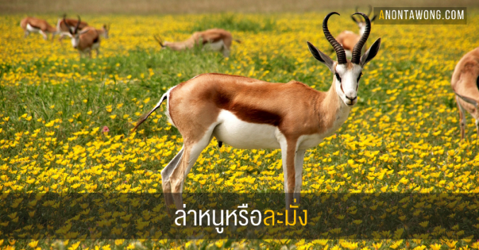 20170403_mouse_antelope