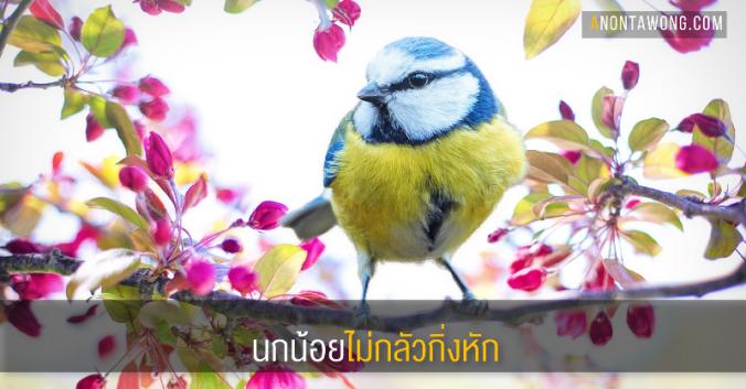 20170607_BirdNofear