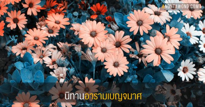 20170615_chrysanthemum