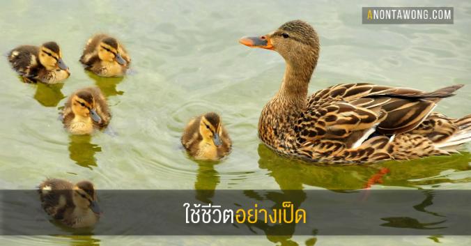 20171207_duck