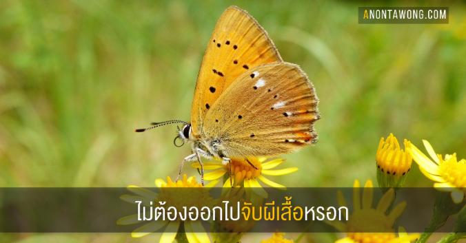 20180222_butterfly