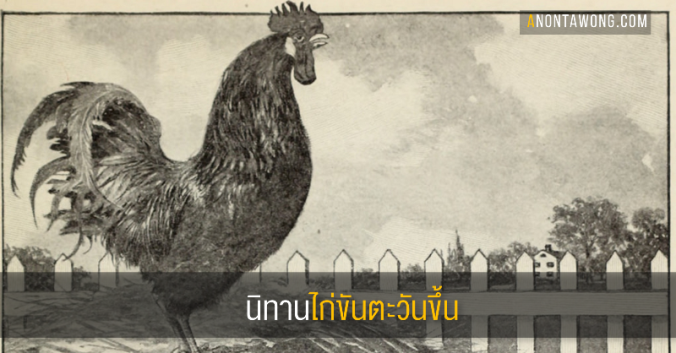 20180807_rooster