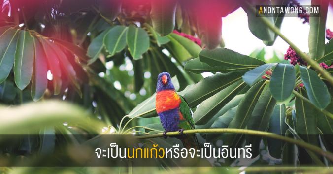 20180919_parrot