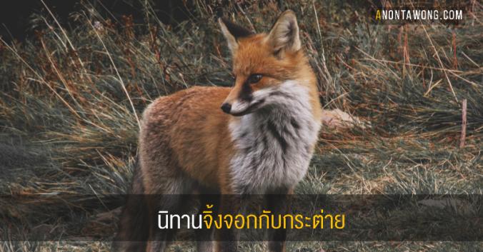 20181019_fox